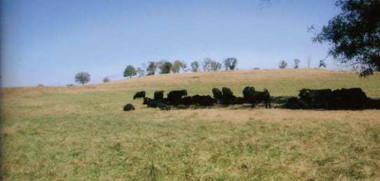McWilliams Angus Ranch- 3,547 Acres w/ Minerals – Muskogee County- SOLD