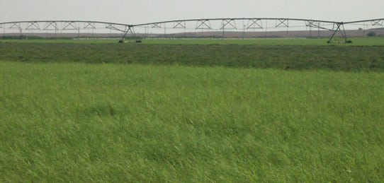 160 Acres- Absolute Auction September 26, 2009- Oklahoma Land (In cooperation w/ Pickens Auctions)