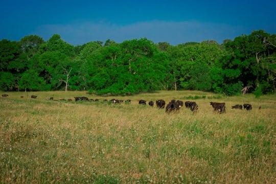 1342 Acres- Rock Creek Ranch – SOLD