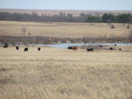 2700 Acres +/- Cross Creek Ranch- Washington County (CONTRACTED)
